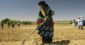 Sahel. Des banques de céréales pour assurer la sécurité alimentaire