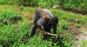 Côte d'Ivoire. La ferme Tchanfetho conjugue développement rural et insertion des jeunes