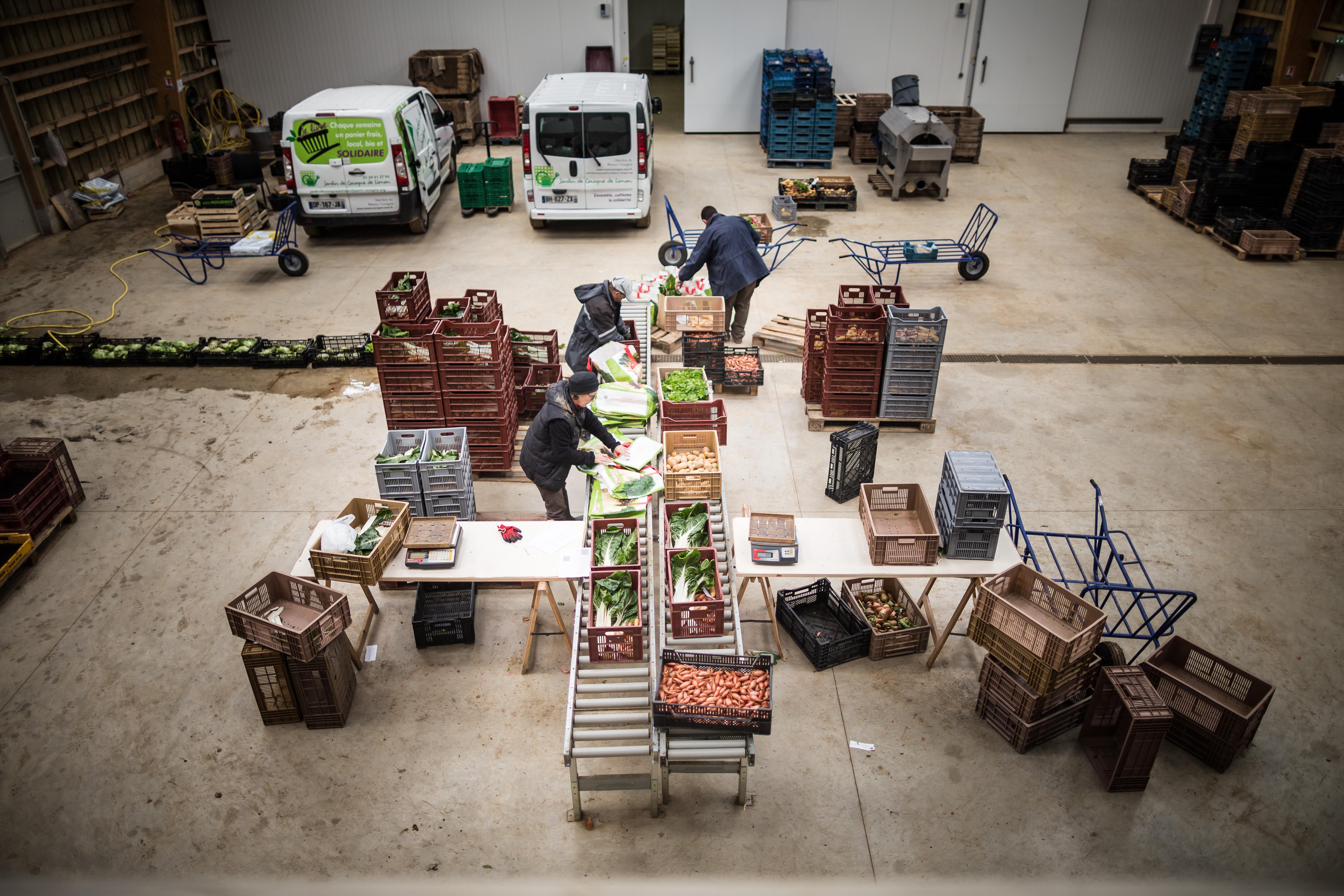Vos dons en action – Lutte contre l'exclusion et maraîchage avec les Jardins de Cocagne