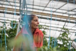 Mihaela installe des ficelles pour maintenir les plants de tomate © Martin Varret